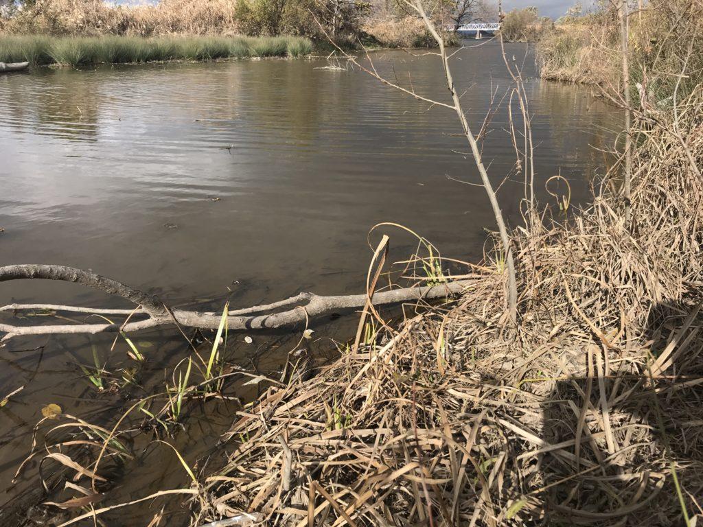 木曽川の風景